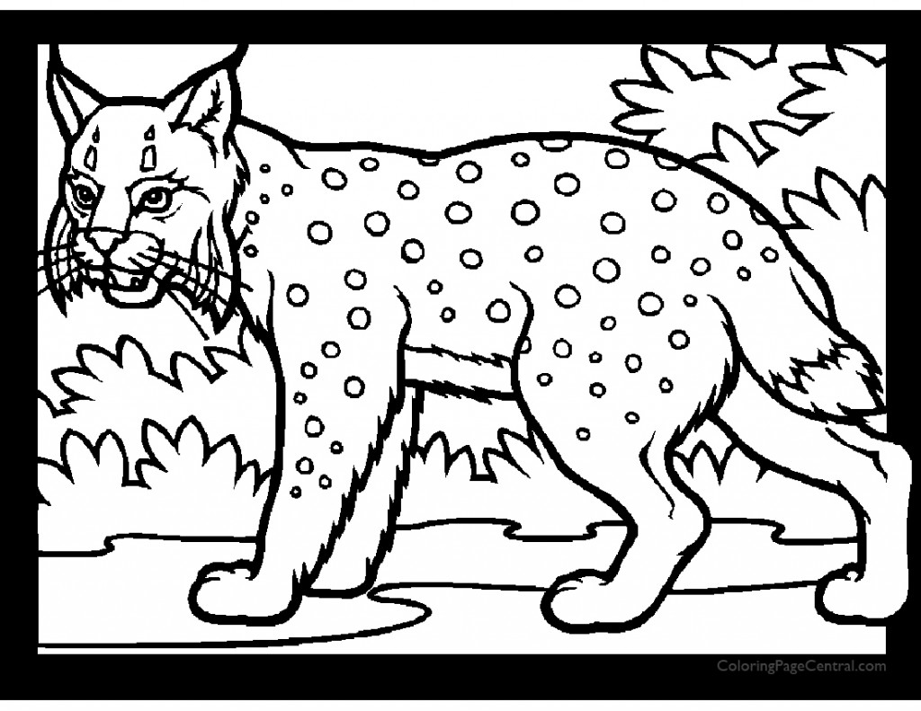 Lynx 01 Coloring Page