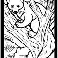 Pine Marten 01 Coloring Page