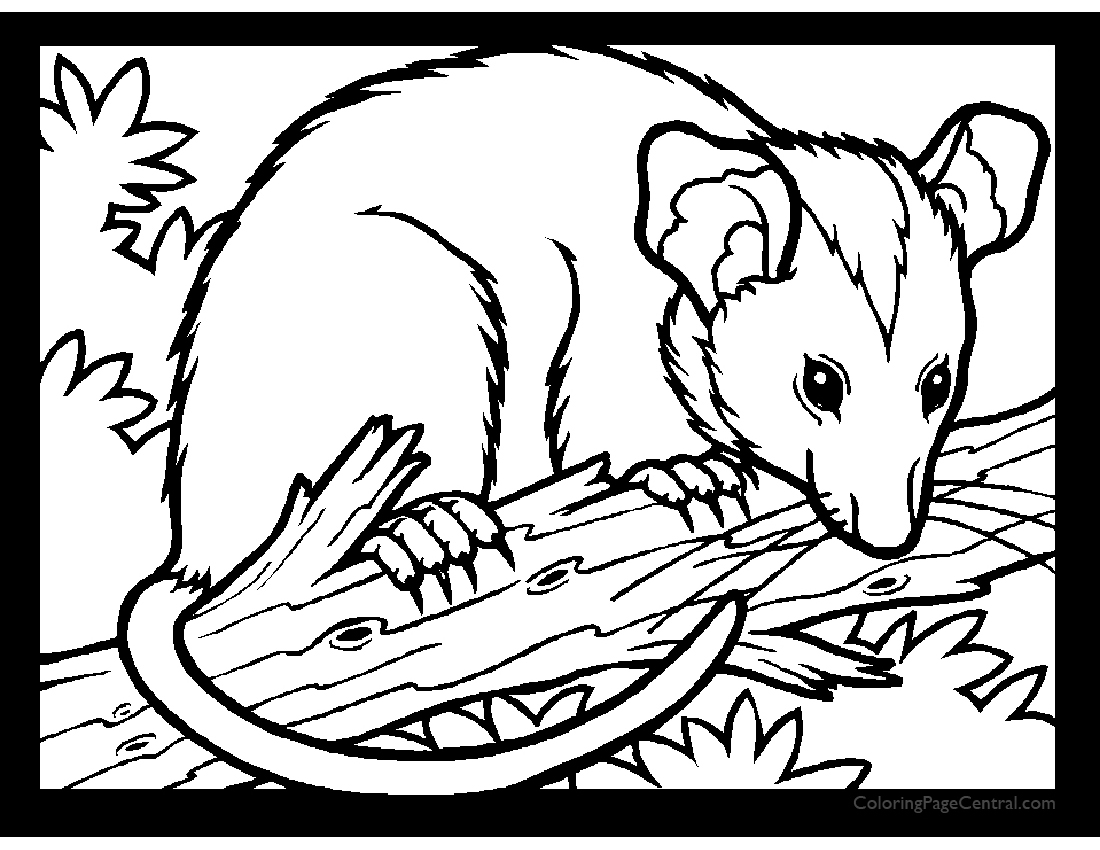 as well  furthermore  together with  furthermore  also  further  further Possum 01 Coloring Page further 656303ed 618b 4703 a6d8 e6ba82152444    CB314527273 as well  moreover . on new disney princess coloring pages print