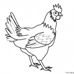 Chicken 01 Coloring Page
