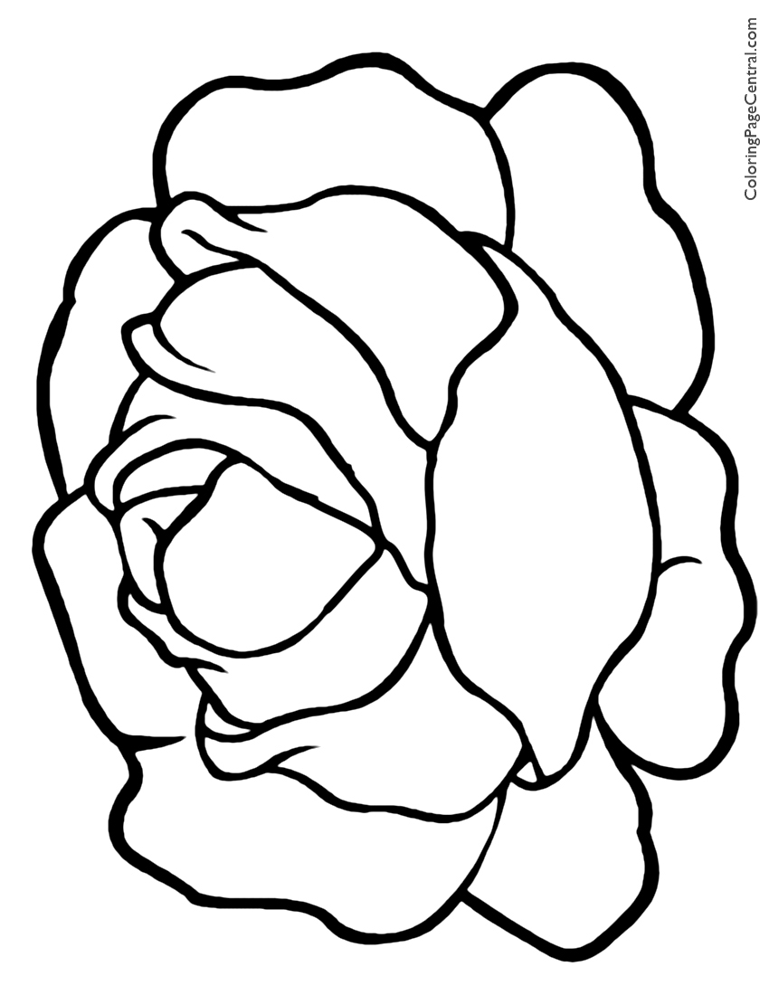 Lettuce 01 Coloring Page Coloring Page Central Lettuce Coloring Page