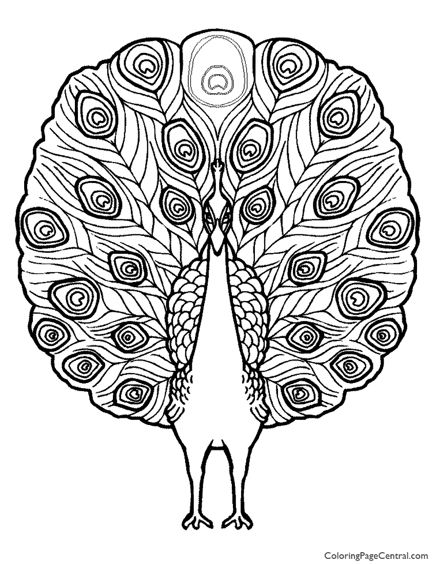 Peacock 02 Coloring Page Coloring Page Central