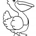 Pelican 01 Coloring Page