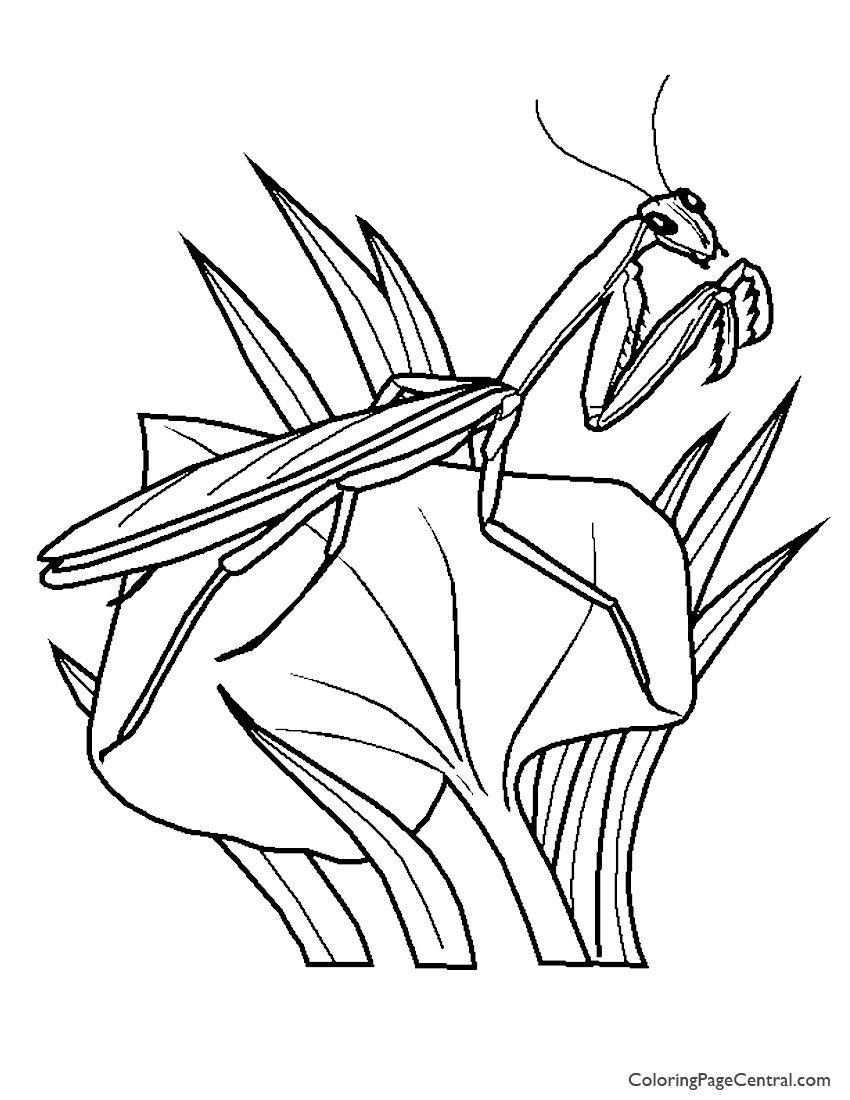 mantis coloring pages - praying mantis 01 coloring page coloring page central