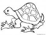 Tortoise 01 Coloring Page